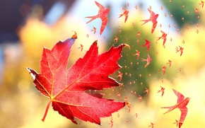 Picture autumn, macro, birds, sheet