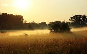 Picture summer, the sun, trees, nature, fog, plants, morning, meadow, grass, the bushes, the sky, heat