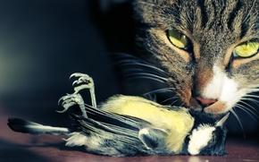 Picture cat, look, bird