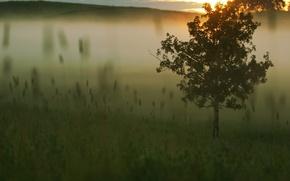 Wallpaper Tree, fog, grass