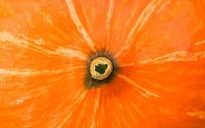 Wallpaper Ass, Pumpkin, Orange