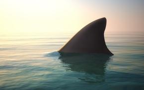Picture ocean, water, shark fin