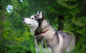 Picture nature, dog, the