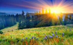 Picture field, forest, the sun, flowers, mountains, nature