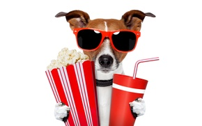 Picture glasses, Jack Russell Terrier, drink, popcorn, white background, cups, humor, tube