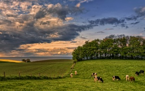 Wallpaper meadows, field, Germany, grass, High grove, shore, trees, sea, greens, Baltic, the sky, horizon, clouds, ...