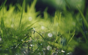 Picture grass, macro, green