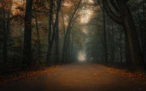 Picture autumn, the city, fog