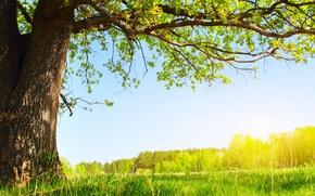 Wallpaper greens, summer, the sun, nature, tree, foliage, Under the tree