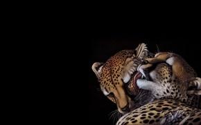 Wallpaper Cheetah, heather lara, art, pair, tenderness, cat