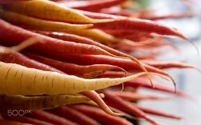 Picture macro, food, focus, carrot