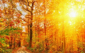 Picture Nature, Autumn, Trees, Forest, Rays Of Light, Seasons