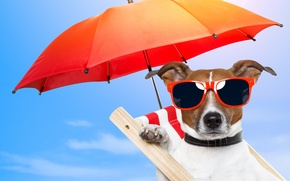 Picture nature, stay, dog, umbrella, glasses, chair, nature, dog, chair, glasses, umbrellas, rest