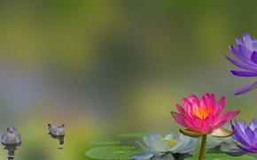 Picture flowers, birds, collage, Lily, water Lily