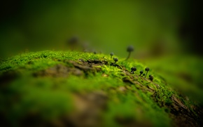Picture autumn, forest, leaves, macro, Wallpaper, mushrooms, moss, stump, forest, green background, autumn, leaves, macro, Wallpaper, …