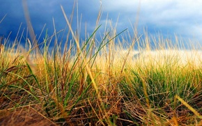 Picture autumn, the sky, grass