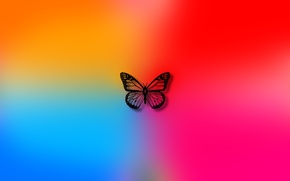 Picture color, background, butterfly, colors, art, wallpaper, butterfly