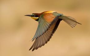 Picture flight, bird, schurka