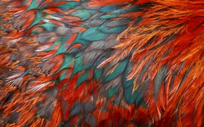 Picture bird, texture, feathers, color