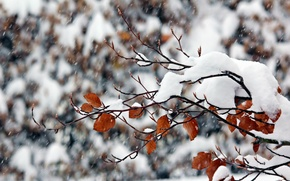 Picture winter, snow, nature, branch