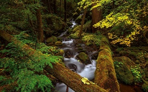 Picture forest, trees, river, thickets, stream