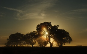 Picture the sun, trees, landscape, nature, morning