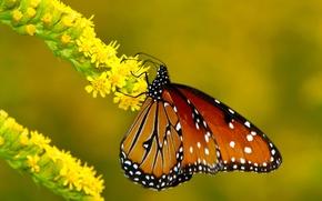 Picture flower, macro, butterfly, branch, Metalic