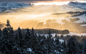 Picture forest, the sky, rays, light, mountains, Winter, morning, Alps