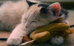 Wallpaper joy, Koshak, sleep