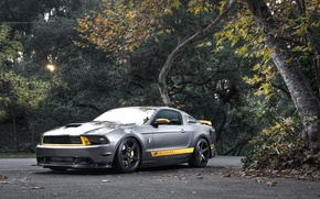 Picture road, forest, trees, Mustang, Ford, Mustang, silver, muscle car, Ford, the front part, silvery