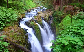Picture forest, trees, river, waterfall, stream, USA, Washington, Olympic National Park, Sol Duc Falls