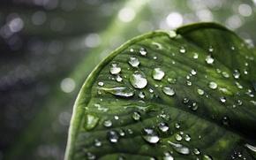 Picture greens, drops, macro, sheet