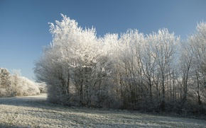 Picture cold, winter, snow, trees, Nature, frost, track, trees, nature, winter, snow, scenery, cold, path, frost