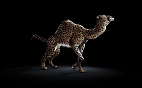 Picture BACKGROUND, TAIL, SPOT, BLACK, LEOPARD, CROSSING, CAMEL, A CROSS between, HUMP, The MIXTURE