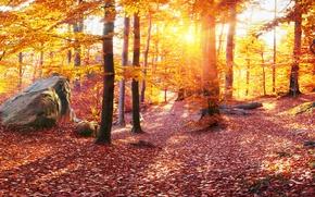 Wallpaper Leaves, Carpathians, Stones, Ukraine, Forest, Trees, Nature, Autumn