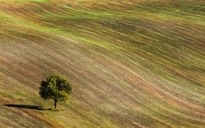 Picture tree, The Czech Republic, Czech Republic, field