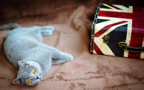 Picture cat, lies, flag, grey, suitcase, British, UK, yellow, eyes, cat
