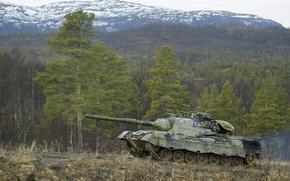 Wallpaper leopard1, tank, forest