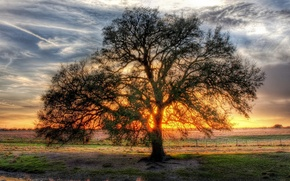 Wallpaper tree, the sun, branched, clearance