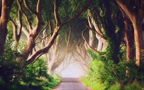 Wallpaper trees, fog, morning, Northern Ireland, Antrim County, the road Bregagh Road, Ballymoney, Dark alley