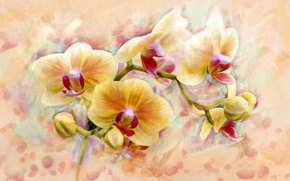 Picture flower, art, form, orchids, flower, orchid, flower, beauty., so, originality, fabulous, Shine