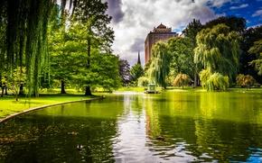Picture greens, grass, trees, pond, Park, duck, home, USA, Boston, Massachusetts