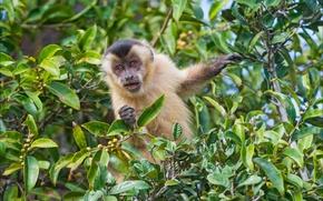 Picture animals, nature, monkey, monkey, nature, animal