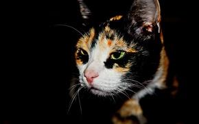 Picture Koshak, profile, in the dark