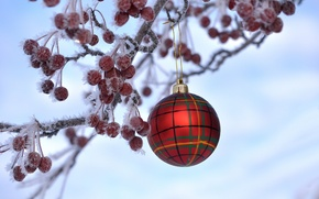 Picture frost, berries, new year, Christmas, branch, ball, fruit, crystals