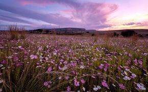 Picture landscape, sunset, flowers