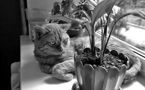 Picture cat, flowers, stay, towel, chest, black and white.