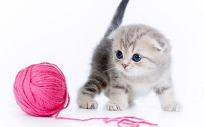 Wallpaper tangle, kitty, thread