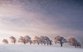 Picture winter, trees, the wind, line, horizon, trees, line, winter, horizon, wind