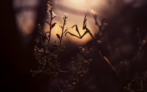 Picture leaves, light, branches, plant, mantis, lighting, silhouette, insect